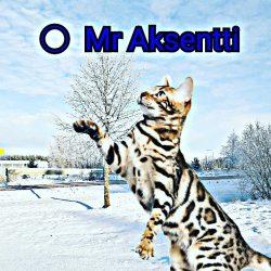 Mr Aksentti